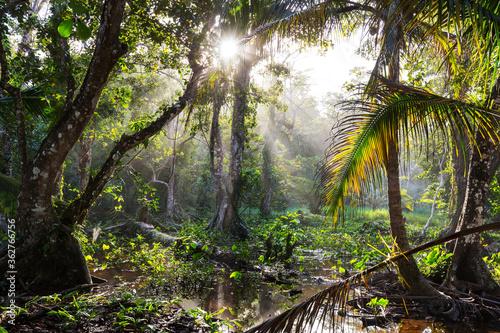 Fotografia Jungle in Costa Rica