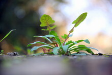 Selective Focus On Green Leaves Of A Seedling And Bokeh Effect In The Background