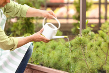 Male Gardener With Watering Ca...