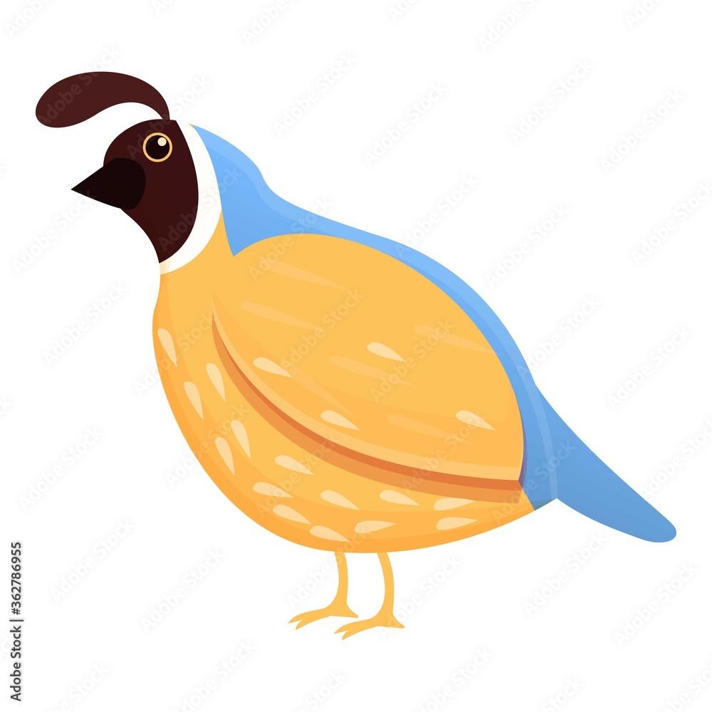 Fototapeta Feather quail icon. Cartoon of feather quail vector icon for web design isolated on white background