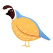 Feather quail icon. Cartoon of feather quail vector icon for web design isolated on white background