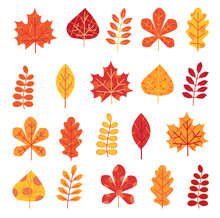 Autumn Leaves Set Isolated On ...