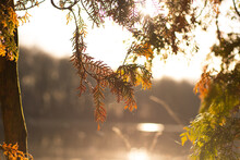 Close-up Of Sunlight Streaming Through Tree During Autumn