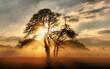 Leinwandbild Motiv Silhouette Trees On Field Against Sky During Sunset