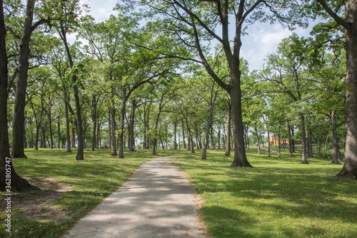 Fotografia, Obraz Trees In Park