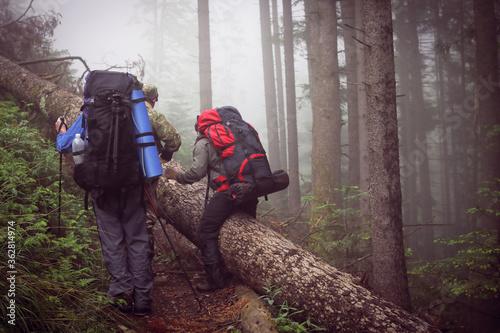 Fototapeta Two men hike in forest with backpack for trekking obraz