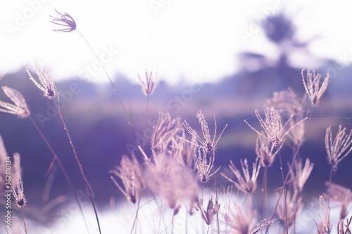 Fotografie, Obraz Close-up Of Flowering Plants On Field Against Sky