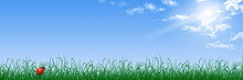 Blue Sky, Grass And Ladybug Illustration For Web Banner