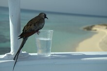 Bird Perching On A Glass