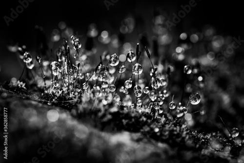 Papel de parede Close-up Of Wet Plants