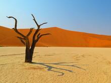 Dead Tree On Sand Dune Against Clear Sky - Sossusvlei Namib Desert