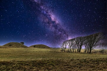 Beautiful scenery of the Milky Way Galaxy over a land with leafless trees