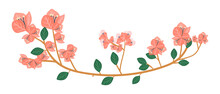 Hand Drawn Bougainvillea Flowe...