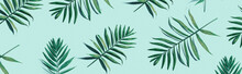 Tropical Palm Leaves From Abov...