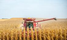 Farmer Operates A Combine Duri...