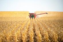 Farmer Operates A Combine During The Agricultural Harvest Of Corn In Late Fall.
