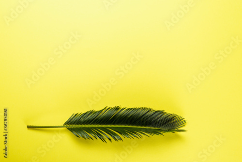Fototapeta top view of green palm leaf on yellow background obraz