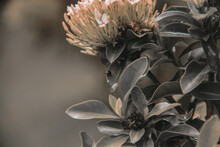 Close-up Of Wilted Flowering P...