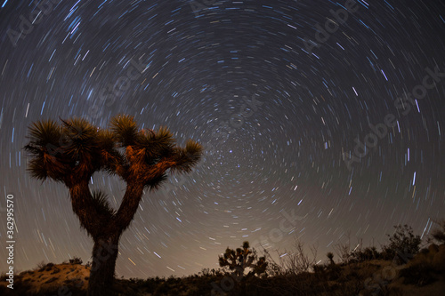 North star and Joshua Tree National Park night landscape in the Mojave desert area of Southern Califfornia. #362995570