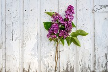 Close-up Of Pink Flowering Plant Against Wooden Fence