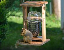 Earl Squirrel Family Breakfast