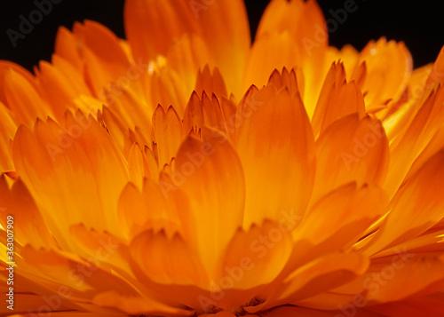 Close-up Of Orange Flower Against Black Background Fototapete