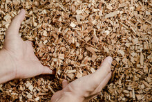 Hands Holding Wooden Chips From Eucalyptus Trees As Fuel For Clean Energy