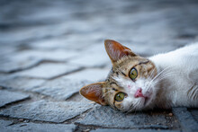Stray Cat Lying Down On Paving...