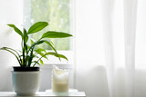 Peace lily plant and white candle by a window