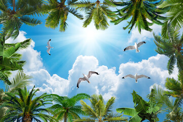 Fototapeta Niebo sun and cloudy sky, palm trees and doves