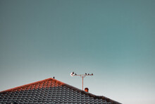 Birds, Moon, Roof, Tv Antenna
