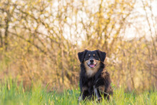 A Dog Is Sitting In A Meadow I...