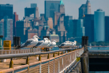 A Row Of Seagulls Standing At ...