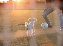 Low Section Of Woman Playing Soccer With Dog At Night