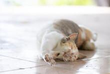 床に寝そべる猫