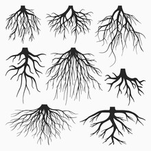 TREE ROOTS VECTOR SET