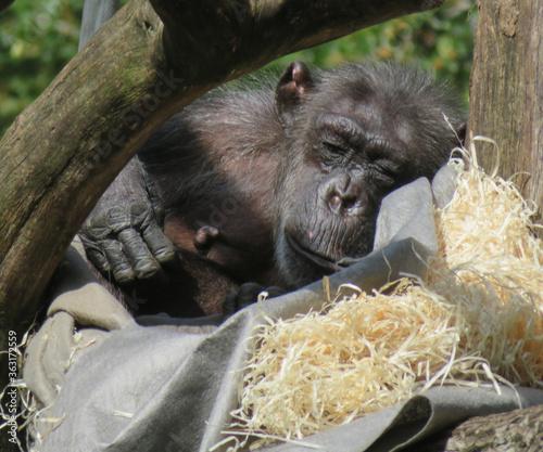 Fotografiet Close-up Of Monkey