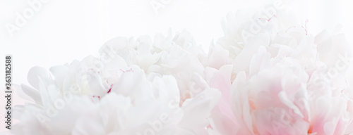 White peony flowers as floral art on pink background, wedding flatlay and luxury branding design