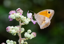 Flowers And Butterfly In Natur...