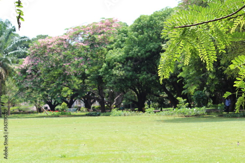 trees in the park - 363190719