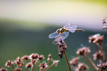 Close-up Of Dragonfly Resting On Plant