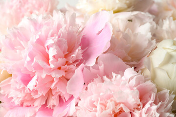 Fototapeta Peonie Beautiful peony bouquet as background, closeup view