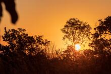Pôr Do Sol Entre árvore Com ...