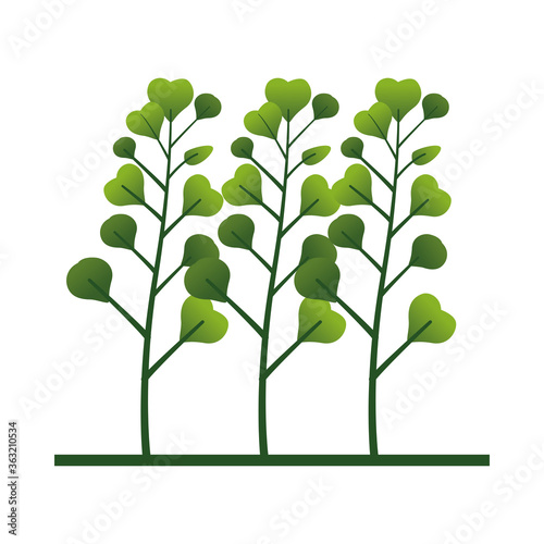 Fotografía branch with leafs plant nature icon