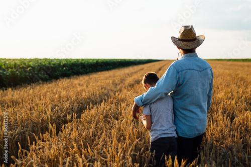 Fototapeta farmer and his son walking fields of wheat obraz