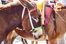 Rhodes, Greece   Rhodes Donkeys