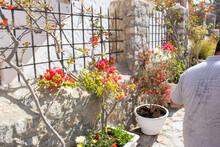 Rhodes, Greece | Rhodes Flowers