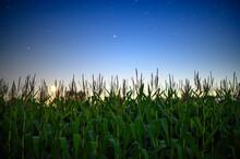 Crops Growing On Field Against...