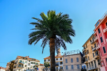 Palm With Buildings In Sanremo...