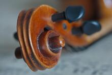 Eine Braune Geigen Schnecke Au...